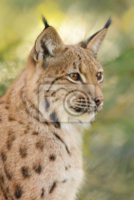 Portrait, lynx, vert, fond