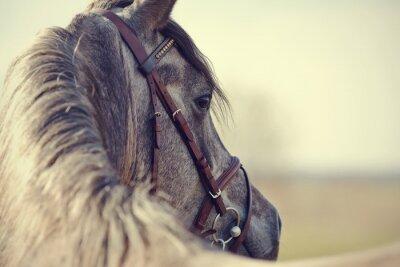 Papiers peints Portrait of a sports stallion
