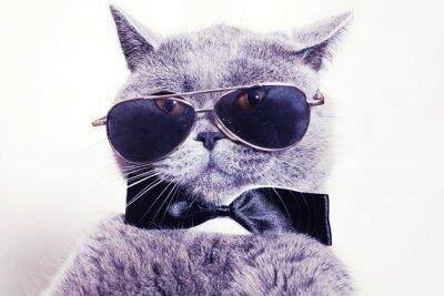 Papiers peints Portrait of British shorthair gray cat wearing sunglasses