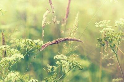 Papiers peints prairie fleurie