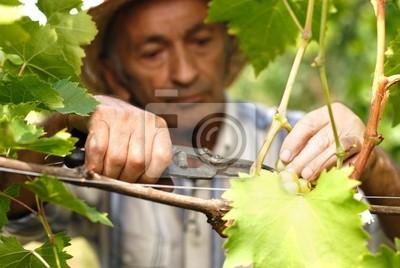Principal vigneron