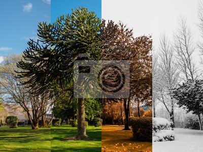 Papiers peints Printemps, été, automne et hiver.