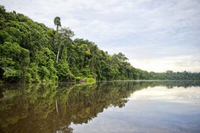 Papiers peints Province de Tambopata