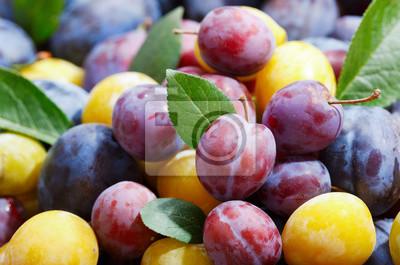 prunes colorées avec des feuilles