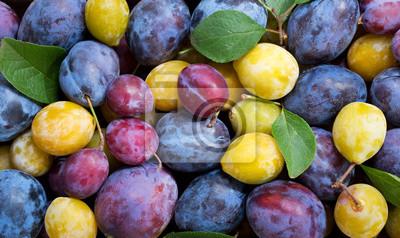 prunes colorées avec des feuilles, vue de dessus