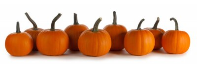 Papiers peints Pumpkins in a row on white background