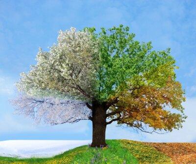 Papiers peints Quatre arbres de saison