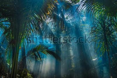Papiers peints Rayons de lumière entre les sapins dans le jardin de la jungle