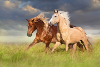 Papiers peints Red and palomino horse with long blond mane in motion on field
