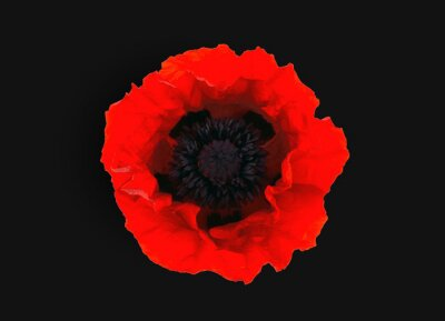 Papiers peints  red poppy isolated on black  background