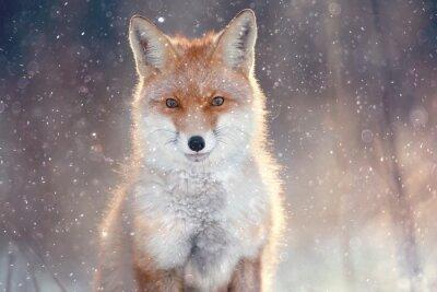Papiers peints Renard roux dans la forêt d'hiver Pretty