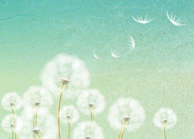 Papiers peints Résumé de fond avec la fleur de pissenlit
