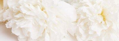 Papiers peints Romantic banner, delicate white peonies flowers close-up. Fragrant pink petals