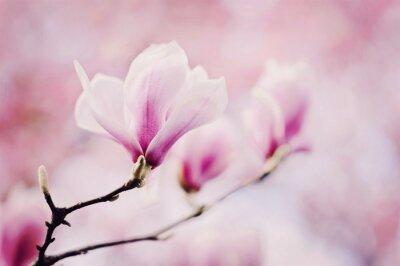 Papiers peints rosa magnolie