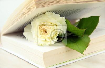 rose blanche à l'intérieur du livre - un concept d'histoire d'amour
