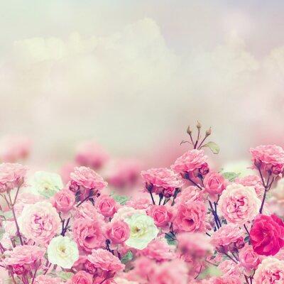 Papiers peints Rose Fleurs