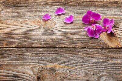 Papiers peints Rose, orchidée, fleurs, bois, fond