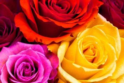 Papiers peints Roses, fond