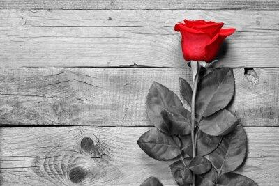 Papiers peints Rouges, rose, noir, blanc, bois, fond