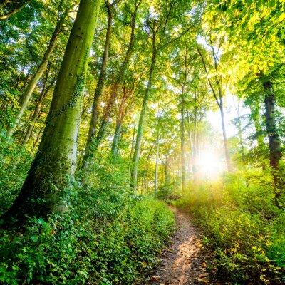 Papiers peints Route forestière au soleil