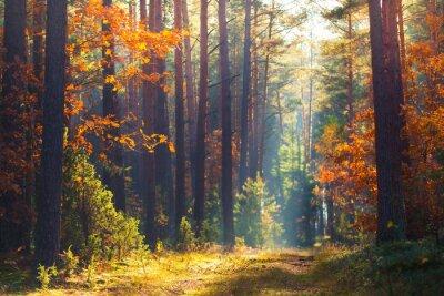Papiers peints Scène de la forêt d'automne