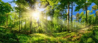 Papiers peints Scenic forest of deciduous trees, with blue sky and the bright sun illuminating the vibrant green foliage, panoramic view