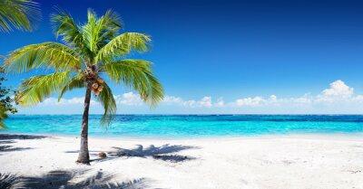 Papiers peints Scénique, corail, plage, paume, arbre