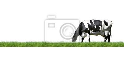 Schwarz / Weiß gescheckte Kuh