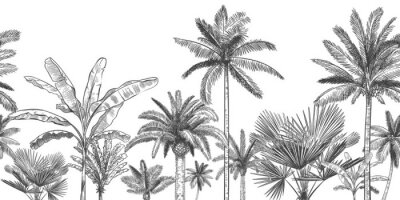 Papiers peints Seamless horizontal tropical background. Hand drawn palm trees, sketch exotic tropic jungle leaves and paradise palm tree vector wallpaper illustration. Exotic palm tree botanical, rainforest foliage