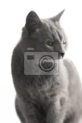 séance de chat de fond blanc