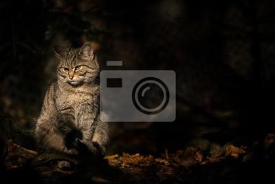 Séance, sauvage, chat, sombre, forêt, séance, soleil ...