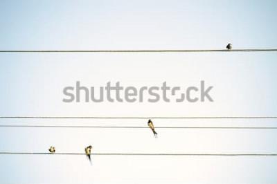 Papiers peints Seins oiseaux assis sur des fils de printemps minimaliste fond