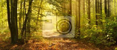 Papiers peints Sentier à travers la forêt enchantée en automne, brume matinale illuminée par la lumière du soleil