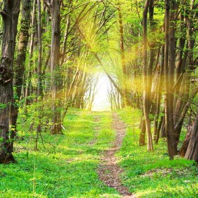 Papiers peints Sentier, beau, vert, Parc