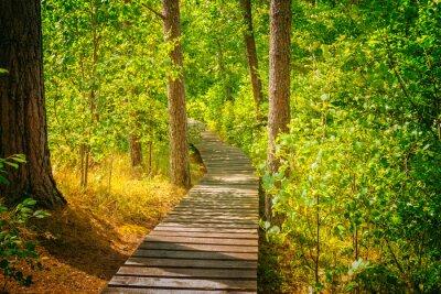 Papiers peints Sentier, bois, forêt