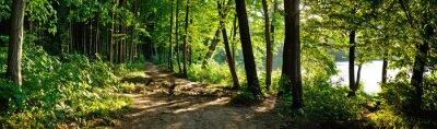 Papiers peints sentier dans la forêt