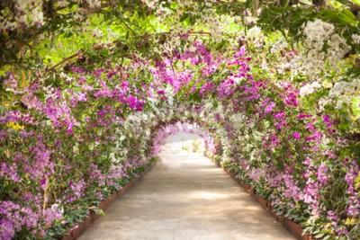 Papiers peints sentier dans un jardin botanique avec des orchidées qui bordent le chemin.