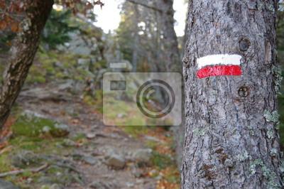 Papiers peints Sentier de randonnée de montagne balisé en rouge et blanc sur un arbre