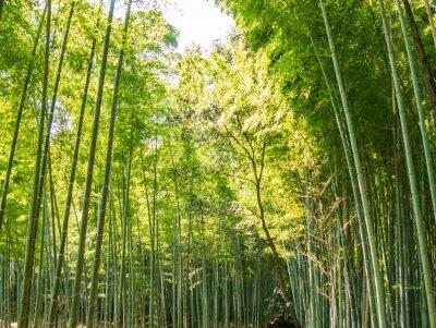 Papiers peints Sentier en bambou