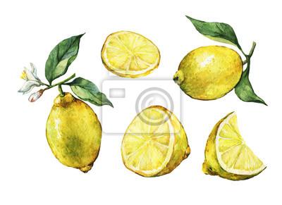 Set avec entier et tranches citron frais citron avec feuilles vertes et fleurs. Main, tiré, aquarelle, peinture, blanc, fond