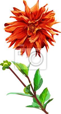 Set de fleurs isolé de Georgina et laisse 3