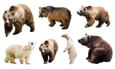 Papiers peints Set de nombreux ours. Isolé sur blanc