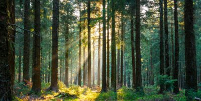 Papiers peints Silent Forest in spring with beautiful bright sun rays