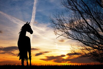 Papiers peints Silhouette de cheval au coucher du soleil