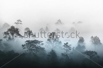 Papiers peints silhouette de plusieurs couches de forêt tropicale humide forêt recouverte de brouillard de vapeur brumeuse matin. Point du jour rêveur dans une belle plaine avec une rangée d'arbres dans le parc