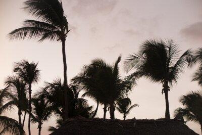 Papiers peints Silhouette des palmiers au beau coucher du soleil