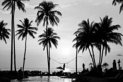 Silhouettes De Palmiers Sur Une Plage Tropicale Photographie Papier