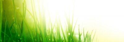 Papiers peints soft green grass background