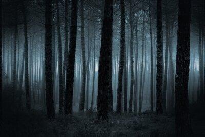 Papiers peints Sombre, brumeux, forêt