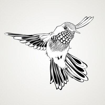 Papiers peints Style tiré par la main d'oiseau de colibri d'oiseau.